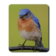 1100x1500eastern bluebird Mousepad
