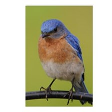 1100x1500eastern bluebird Postcards (Package of 8)