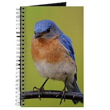 1100x1500eastern bluebird Journal
