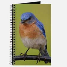 1100x1500eastern bluebird Journal