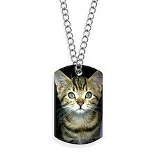 iphone_3g kitten curtain Dog Tags