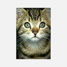 iphone_3g kitten curtain Rectangle Magnet