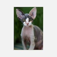 Pixie- Devon Rex Kitten Rectangle Magnet