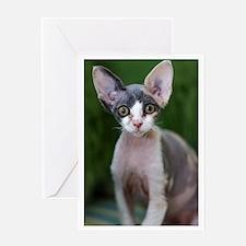 Pixie- Devon Rex Kitten Greeting Card