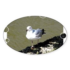 Seagull3 Decal
