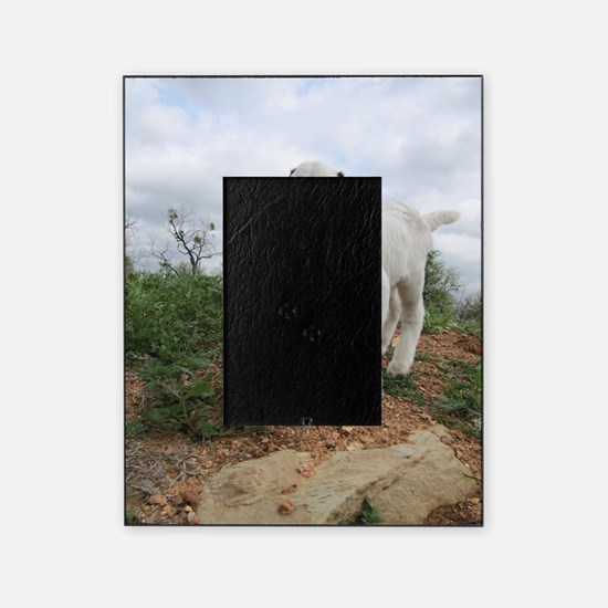 Kid Goat On Hill Picture Frame