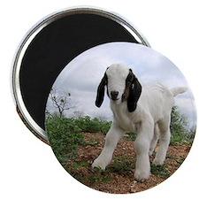 Kid Goat On Hill Magnet
