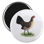 Brassy Back Hen Magnet