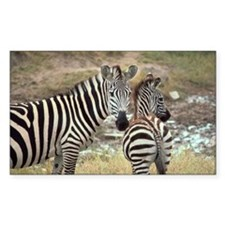 Zebras Decal