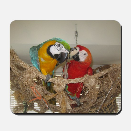 2000x2000 scarlet macaw and blue and gol Mousepad