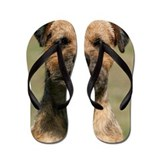 Border terrier Flip Flops