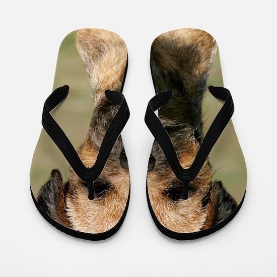 Border Terrier 9Y325D-038 Flip Flops
