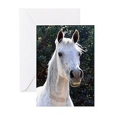 Arabian Mare Greeting Card