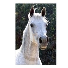 Arabian Mare Postcards (Package of 8)