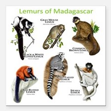 "Lemurs of Madagascar Square Car Magnet 3"" x 3"""