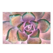 Stone Flower Postcards (Package of 8)