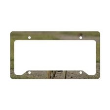 African baboons License Plate Holder