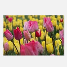 Pink and Yellow Tulips Postcards (Package of 8)