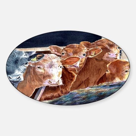calveslicense Sticker (Oval)