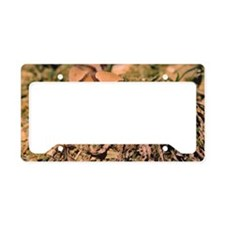 Copperhead snake in desert License Plate Holder