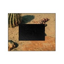Gila monster in desert Picture Frame