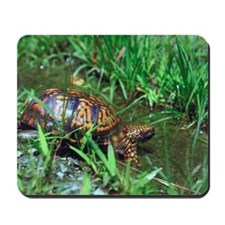Eastern box turtle Mousepad