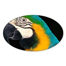 Blue and gold macaw Decal