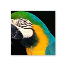 "Blue and gold macaw Square Sticker 3"" x 3"""