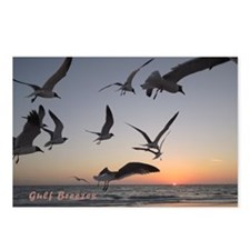 Laughing   gulls Postcards (Package of 8)