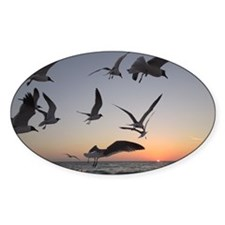 Laughing   gulls Decal