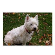 West Highland Terrier Postcards (Package of 8)