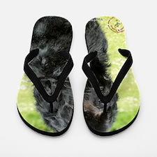 Newfoundland 9T086D-067_2 Flip Flops