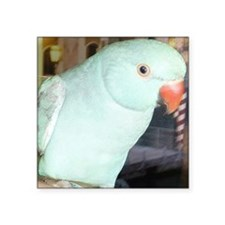 "Indian Ringneck Parakeet Square Sticker 3"" x 3"""