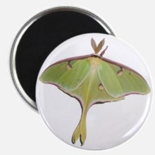 Large Green Moth Magnet