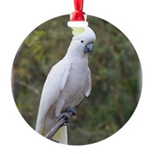 Sulphur Crested Cockatoo 9Y319D-073 Ornament