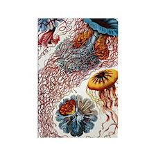 haeckeljellyfish1Original Rectangle Magnet