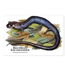 Red Hills Salamander Postcards (Package of 8)