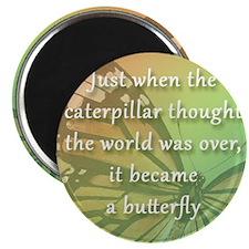 9sq_bev_butterfly Magnet