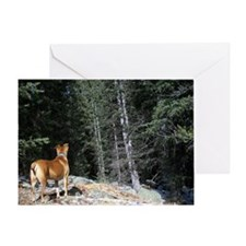Looking into the Wilderness Greeting Card