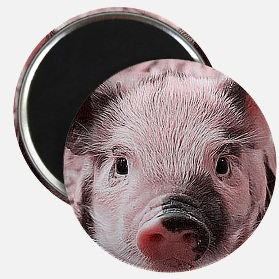 sweet piglet, pink Magnets