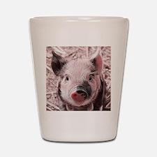 sweet piglet, pink Shot Glass