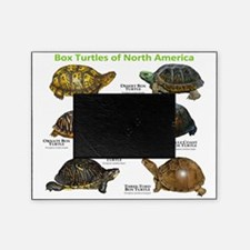 Box Turtles of North America Picture Frame