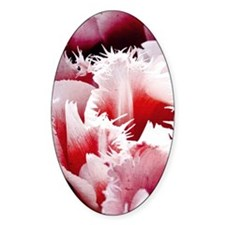 pink tulip small poster Decal
