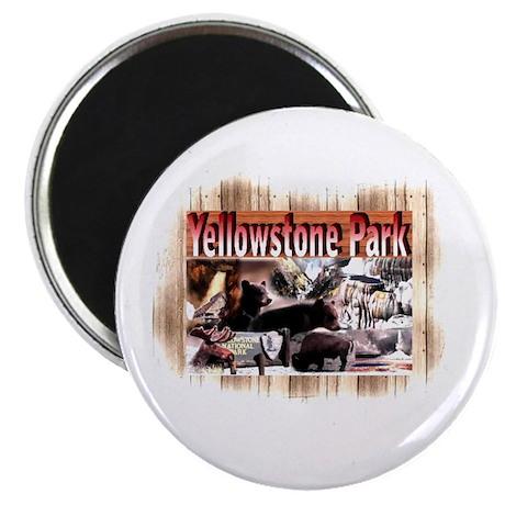 Yellowstone Park souvenir Magnet