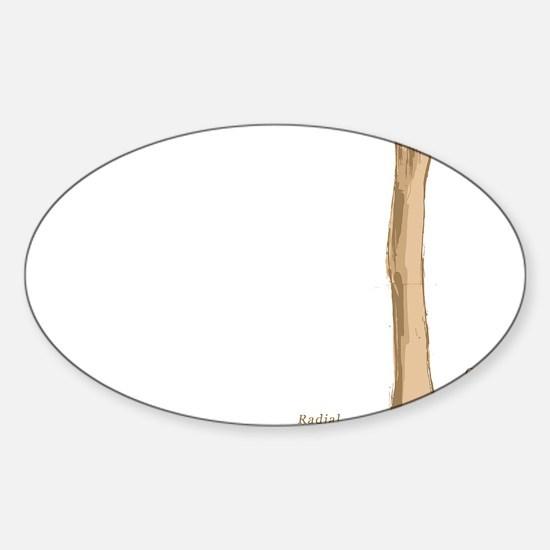 Humerus Sticker (Oval)