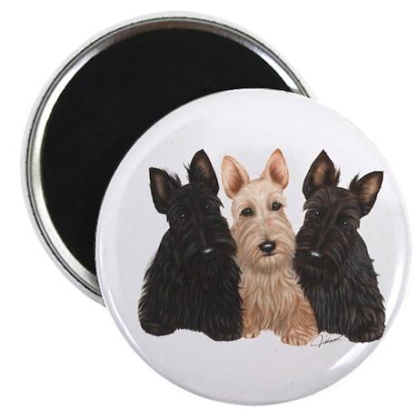 Scottish Terrier - 3 puppies Magnet