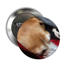 """Let Sleeping Dogs Lie 2.25"""" Button"""