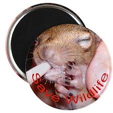 Save Wildlife Magnet