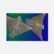 Wonky Whip Ray Rectangle Magnet