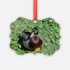 385x245_wallpeel_duck_1 Ornament